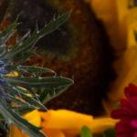 Blogowski special: Jemandem eine Freude machen