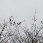 ein 12tel Blick: Februar