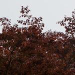 ein 12tel Blick: April