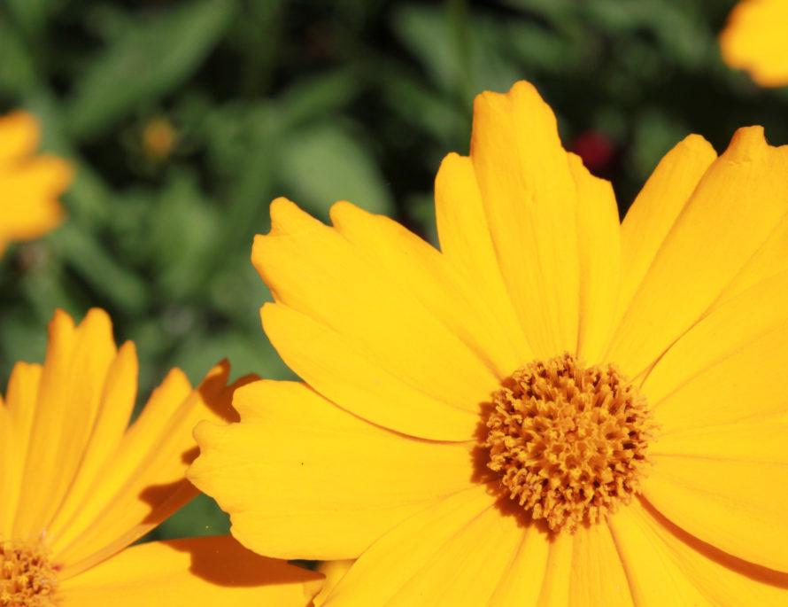 Blumen auf der Mainau