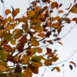 ein 12tel Blick: Oktober