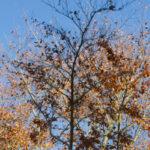 ein 12tel Blick: November