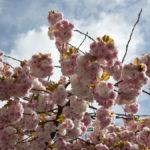 ein 12tel Blick: Der Harkortsee im April 2015